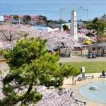 【mį】函館公園 桜の撮影練習