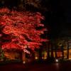 【mį】はこだてMOMI-G(もみじ)フェスタ/見晴公園(香雪園)で紅葉撮影会 DPSS課外授業
