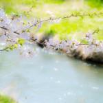 【mį】初めての場所から桜撮影を♬