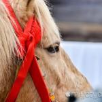 【mį】函館八幡宮 新年騎馬参拝を見て来ました