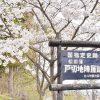 【mį】松前藩戸切地陣屋跡桜並木を歩いて見た