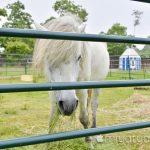 【mį】大沼流山温泉『Paard Musée』(パド・ミュゼ)に行って来ました!!
