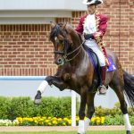 【mį】函館競馬場で馬を撮って来たよ♬