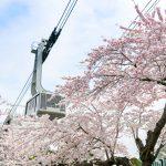 【mį】今年は1回しか行けなかった桜 in 函館公園